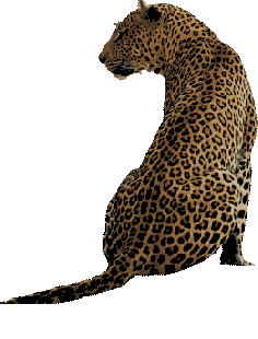 Witwater Safari Lodge Leopard Logo